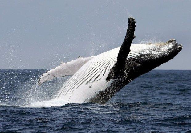 Walfang-Tagung in Madeira