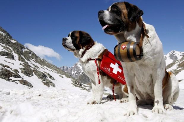 bernhardiner-matterhorn-verbot-zermatt