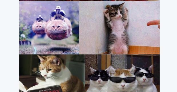 Twitter_Katzen