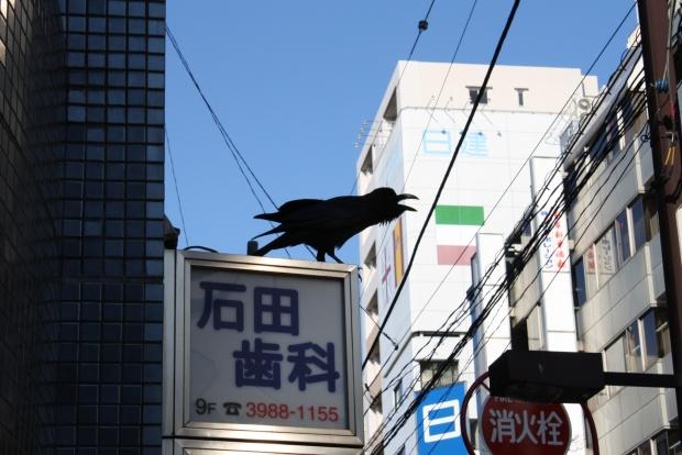 Krähen Japan