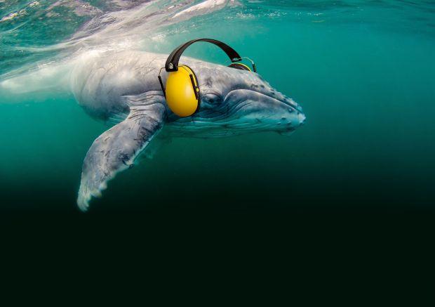 KampagneSilentOceans_Wal_72dpi (c) OceanCare